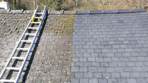 roof moss removal service sussex